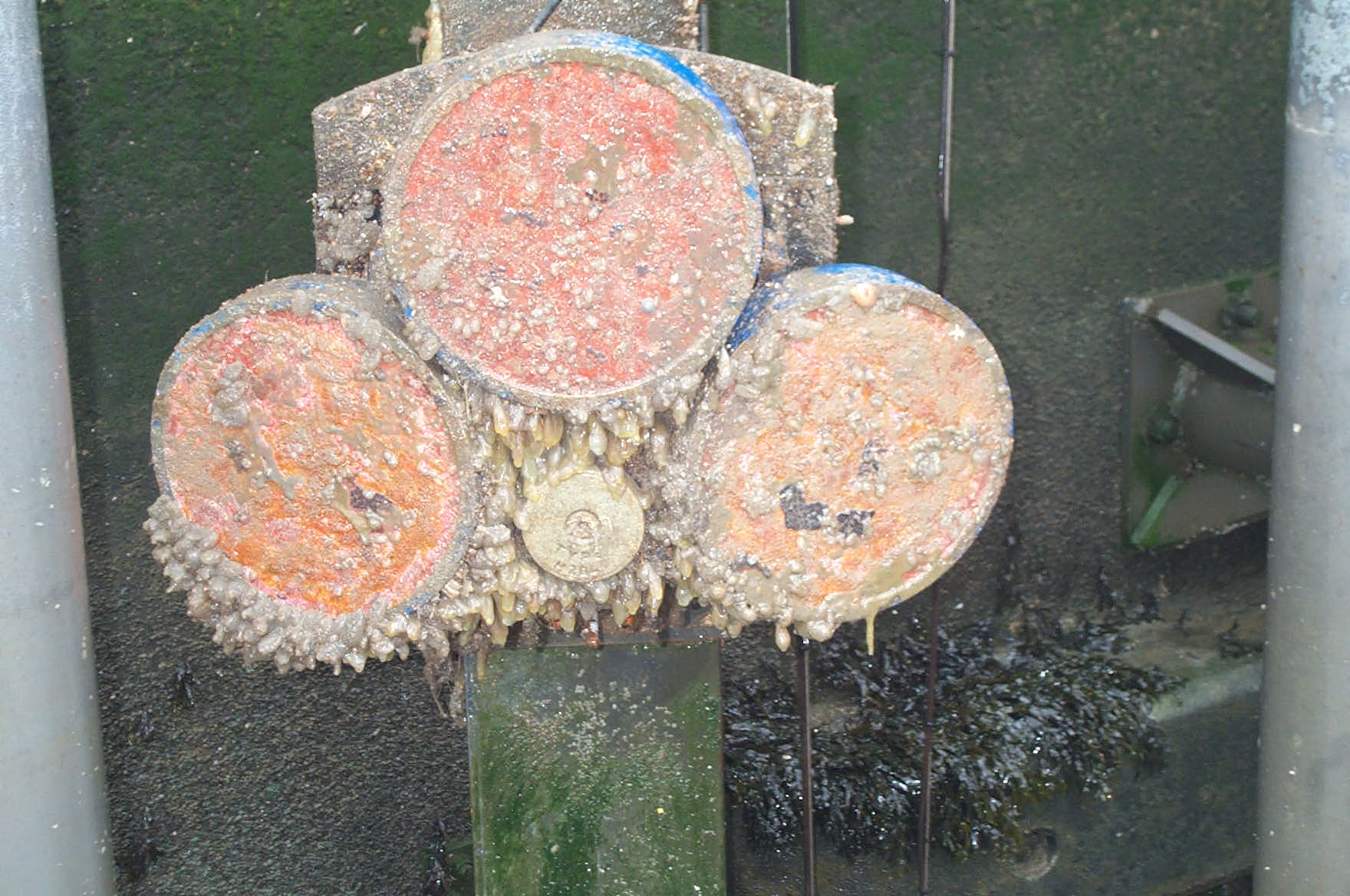 Biofouling examples